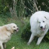 ZZP leren hond (3)